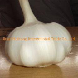 새로운 작물 2019년 중국 일반적인 백색 신선한 마늘