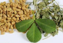 Estratto naturale del seme di fieno greco dell'estratto della pianta con l'erba di 4-Hydroxyisoleucine 20% di erbe