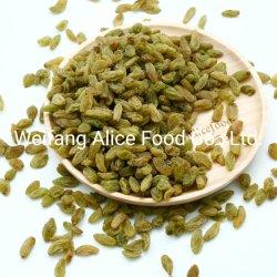 سعر جيّدة طبيعيّ حلوة زبيب ثمرة [دري غرب] اللون الأخضر زبيب