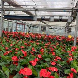 Pots de fleurs et plantes artificiellement chambre