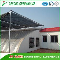 Solar Zenong Green House com sombreamento de fora para tomate e pepino/Morango