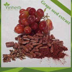 95 % pur antivieillissement Anthocyanidins Extrait de pépins de raisin poudre brute