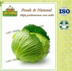 Китайский наилучшего качества свежих овощей фиолетового цвета зеленой капусты для экспорта