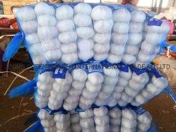Produto de natureza agrícola chinês Alho fresco Produto de saúde boa nutrição branco puro branco normal de qualidade superior preço bom amostra grátis