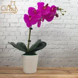 Custom застекленные фарфора сад керамические цветы в горшочках