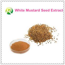 Extracto caliente de la semilla de mostaza blanca de la venta el 100%