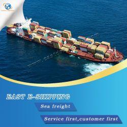 Professional Mer/Ocean Shipping Service à partir de la Chine à l'Égypte/Alexandrie/Port Saïd