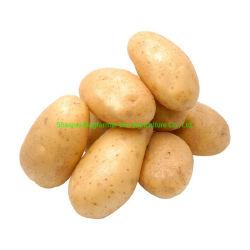 Pomme de terre avec la viande de poulet pour chien Aliments pour animaux familiers
