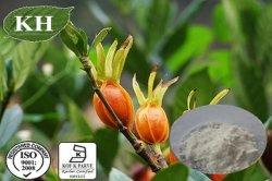 Gardenia-Auszug: Geniposide 10%-98% CAS Nr.: 24512-63-8
