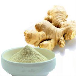 Estándar de Halal 100% de jengibre en polvo soluble en agua un 50% Gingerol Extracto de jengibre