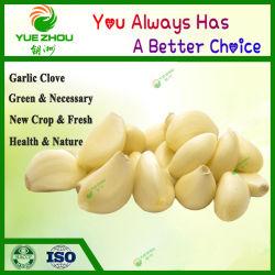 고품질을%s 가진 중국 공장 가격 마늘 뿌리