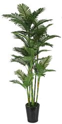Planta china Phoenix artificiales Bamboo Bonsai
