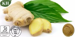 Gingerols de alta calidad Natural Extracto de jengibre