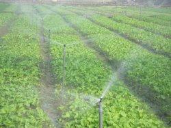 De Sprenkelinstallatie van de landbouwgrond in serre