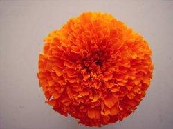 Lebensmittelfarbe-/Farben-natürliches Ringelblume-Blumen-Auszug-Lutein-Puder für Augen 5% 10% UVHPLC 127-40-2.