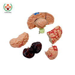Sy-N012 3D Mini modelos anatómicos del cerebro para cirugías& las escuelas de medicina