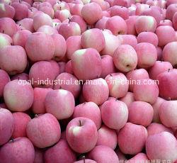Export-frische Standardfrucht frischer roter FUJI Apple