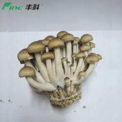 Питательный Anti-Diabetes грибы Shimeji коричневый хорошо подходит для детей и стариков