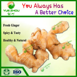 Fertigung von Fresh Ginger 80-150g 150g oben, 200g oben, 250g oben mit Price From China