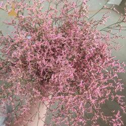 Características organolépticas requeridas secas orgânicos naturais e plantas para a decoração da festa de casamento