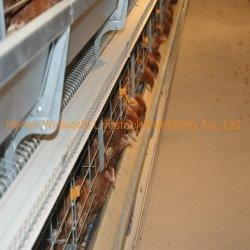 Tipo H Pollo huevos jaula con 112 aves y de la batería Gallinero para la cría de aves