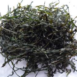 Máquina de alimentação de fábrica Laminárias desfiado secas Japonica Corte secas de algas