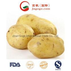 Haut de la qualité de la nouvelle récolte de pommes de terre fraîches de Hollande