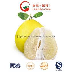 Оптовая торговля супер качества свежих Pomelo для экспорта