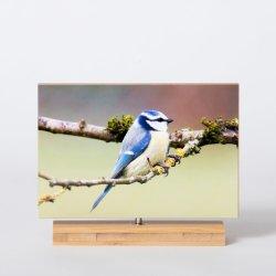 """cornice di bambù naturale della foto del filatore 4 """" *6 """" con adesivo per il regalo"""