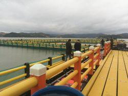 Plaza de la jaula de peces de la Tilapia o mero en el lago