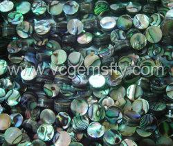 Abalone Shell cordões de moedas