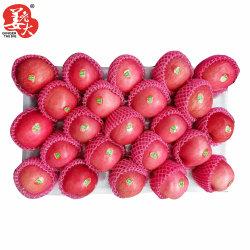 2021 Nieuw gewas vers China Rood papier verpakt FUJI Apple