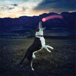 Светодиодный индикатор поза собаки лицом вверх шарики мигает эластичные шаровой шарнир