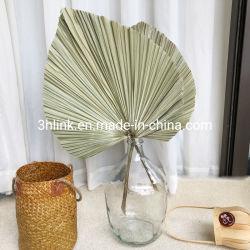 Palm secas ao Sol Sun seca de palmeira, secas os fãs de folhas secas Palms, Sun Folhas de Palmeira e rústico Dom Floral
