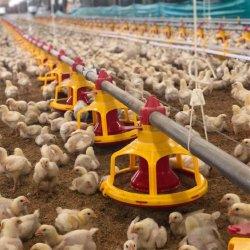 Granja avícola automática de equipos para la parrilla, mejorador de pollo, la capa