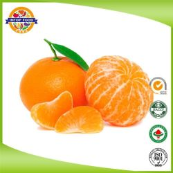 Bebê Nanfeng doces frescas Mandarin