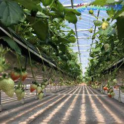 Multi Span туннеля по борьбе с УФ пленка тени чистой абсорбции парниковых газов Invernadeo