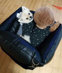 كلب جلد مقاوم للمياه الحيوانات الأليفة في مقعد السيارة أريكة تخصيص