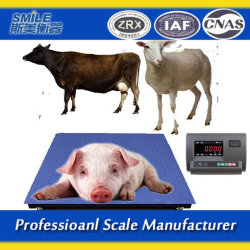 Electrónica personalizada Escala do piso para bovinos