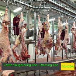 El equipo de la matanza de ganado para sacrificio Halal ganado vacuno y ovino