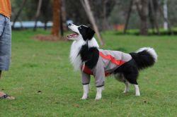Produtos Pet Vestua Softshell impermeável roupas de cães