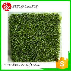 Piscina resistencia UV H60cm boj pared Topiary