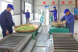 8912中国の有機性EU標準Senchaの緑茶/紅茶