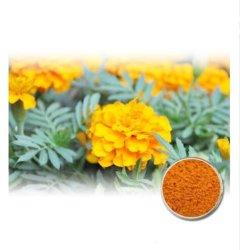 Flor de caléndula caléndula pigmento en polvo/secado/Luteína 100%