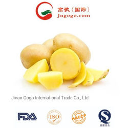 La nouvelle récolte de pommes de terre fraîches chinois (150G et jusqu')