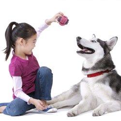Los nuevos juguetes de cuerda de algodón los dientes de los Juguetes de Peluche Perro Mascota