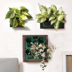 Cadre Photo en bois de jardin, trou unique de culture hydroponique de pots de fleurs le semoir