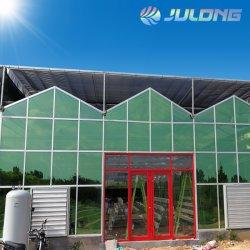 Serra professionale Multi Span Venlo Glass per Hydroponics Growing System Pomodori fragola lattuga prodotti da giardino per la casa con fiori vegetali
