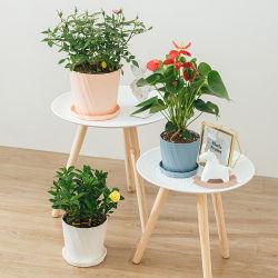 Ruipu (m) PPの物質的で安く小さい屋内デスクトップのプラント植木鉢の庭の鍋のプラスチック植木鉢及びプランター