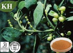 100% натуральные Mistletoe выдержка 4 1 5 1 10: 1